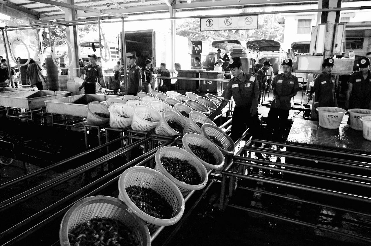 Myanmar : amélioration du cadre de gestion du secteur de la pêche